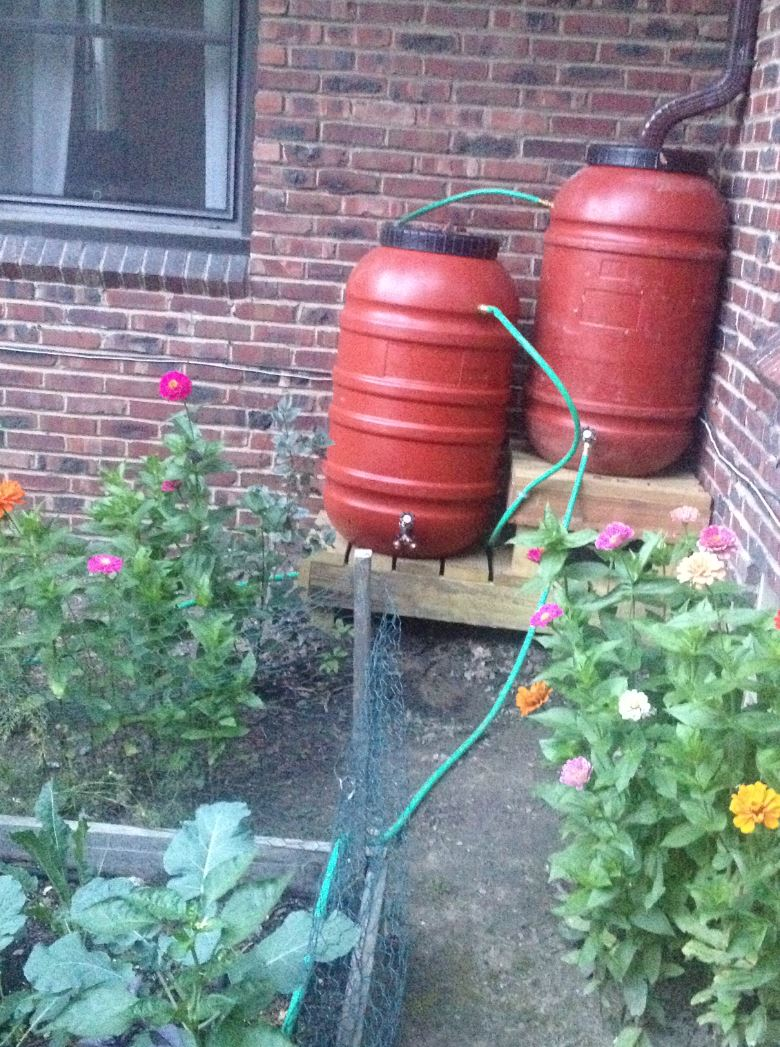 Raines' bioretention, dry well + rainbarrels