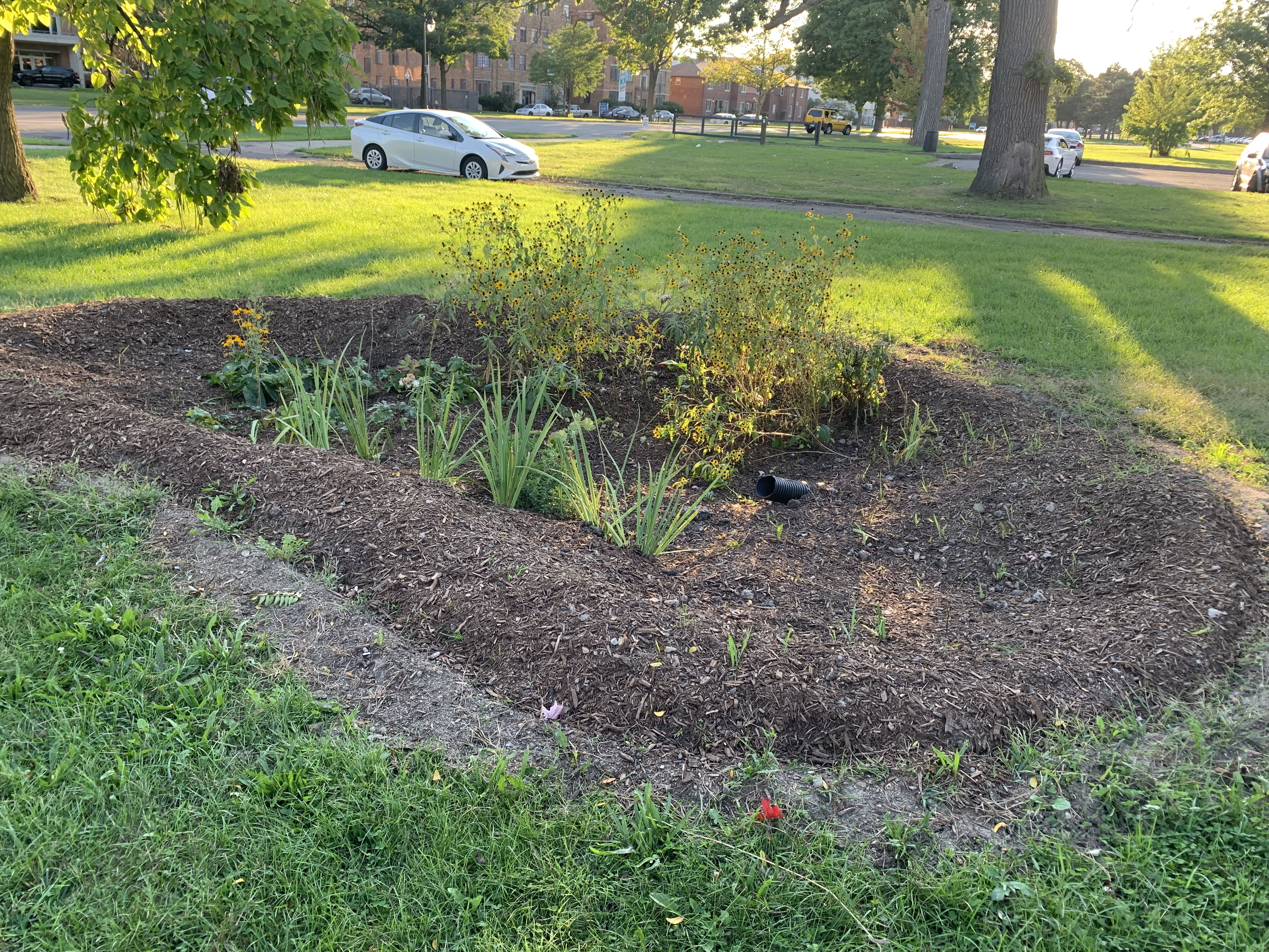 Palmer Park Land + Water Works Rain Garden 1 of 2